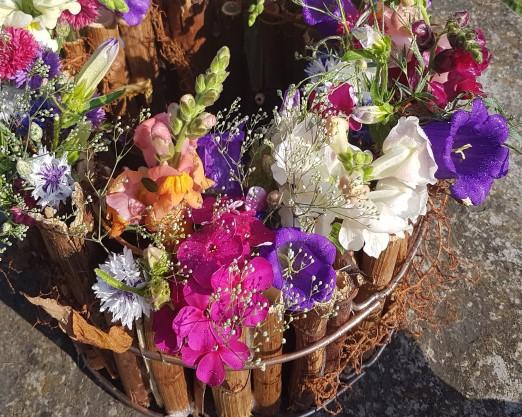 Blumen für Sommer und Herbst