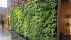 Wand mit vertical garden